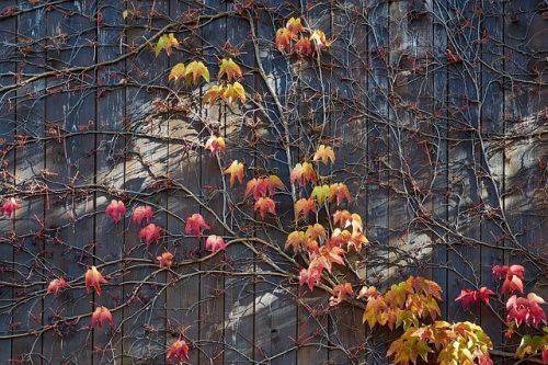 Choisir un abri de jardin bois selon ses caractéristiques